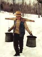 Maple sap collecting near Sutton House