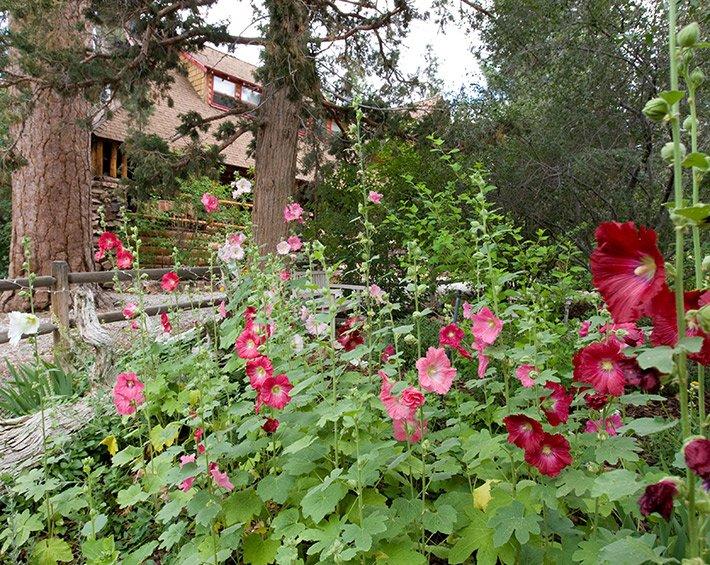 Hollyhocks at Gold Mountain Manor in Big Bear City, CA