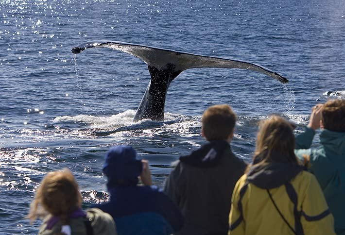 Cape Cod whale watching near Sea Meadow Inn