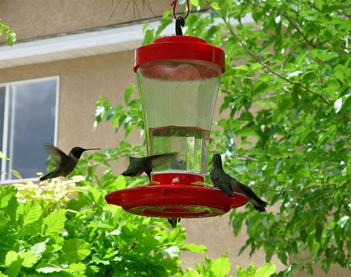 hummingbird feeder at harvest house bed and breakfast