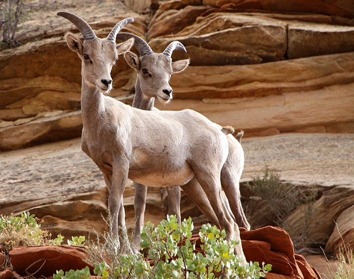 Wildlife Photography in Zion National Park