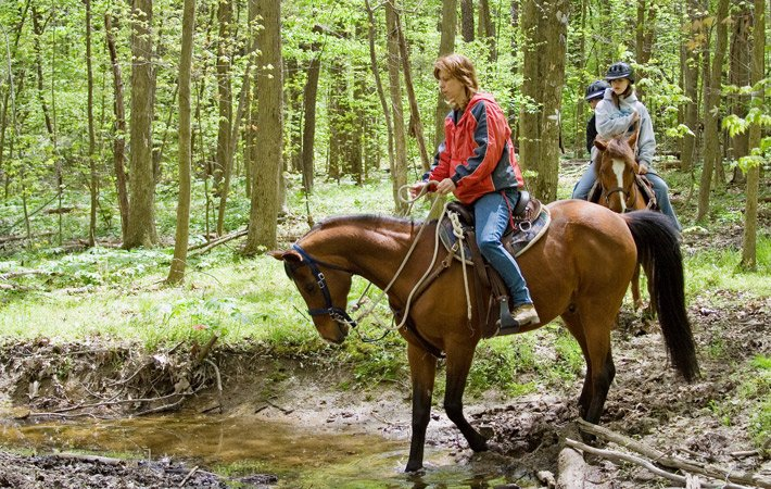 Horse Back RIding At Home In The Woods