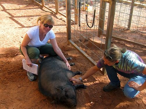 Best Friends Animal Sanctuary near Quail Park Lodge in Kanab, UT