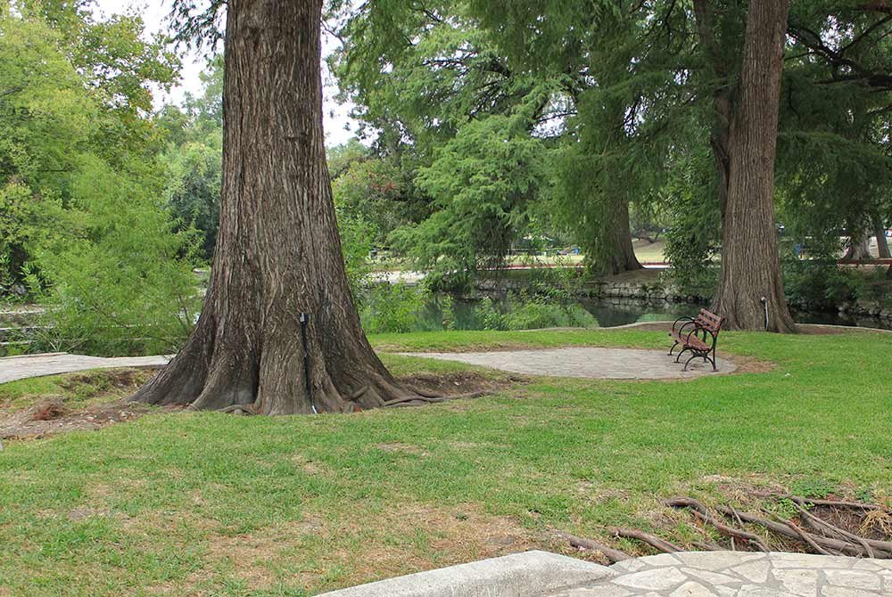 Large tree trunk infront of bench in park