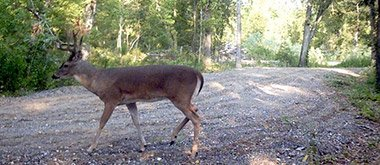 big buck at Windsong Hollow Ranch
