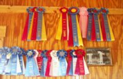 Ribbons garnered by Mercury Equine Center Horse Jumpers