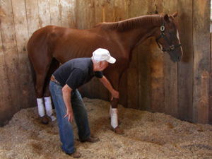 horse lay-up service