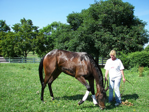 trainer preparing horse for sales prep