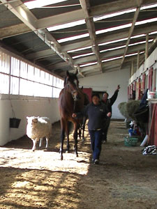 Mercury Equine Team in barn