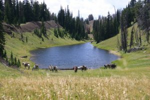 horses and riders relaxing at lake in yellowstone national park