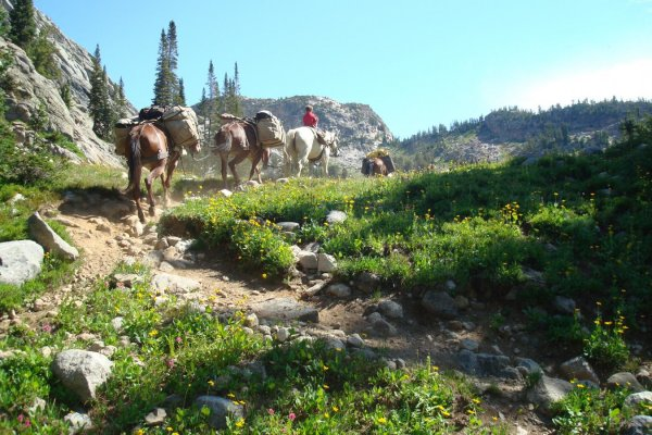 pack string high in the beartooth mountains