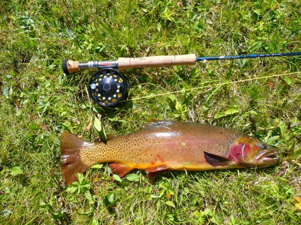 cutthroat trout and fly rod lake fishing in Beartooth Wilderness area