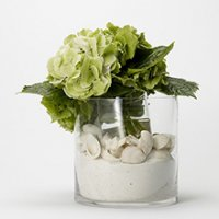 Seashells and Hydrangea Floral Arrangement
