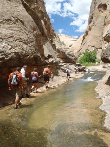 A group hiking a deep canyon alongside a flowing stream