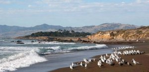 Beach photo in Cambria, California