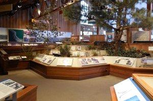 Natural history museum displays