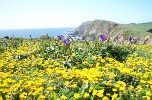 yellow and purple oceanside flowers