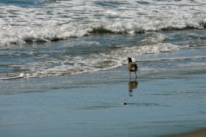 bird at the seashore