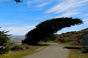 tree overhanging road