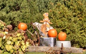 pumpkin decorations on a wagon