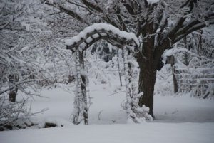 snow covered arbor