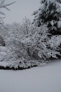 A snow-covered tree