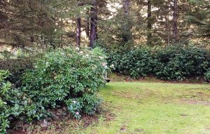 Flowering shrubs around a grassy area
