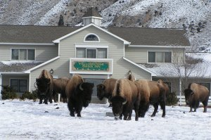 Yellowstone Basin Inn Eco lodging