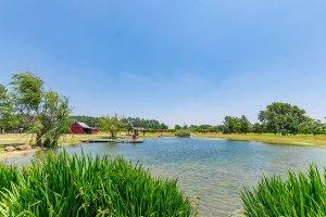 Pond View 2