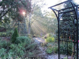 sunlight through the garden