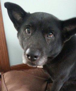 White Birch Inn Pets in-house dog Guinness