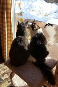 White Birch Inn Pets two cats by window