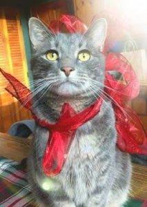 White Birch Inn Pets in-house cat Jax