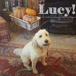 White Birch Inn Pets dog by fireplace Lucy!
