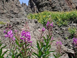 pink wildflowers near mountain