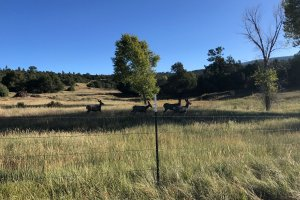 Four deer and a barbed wire fence