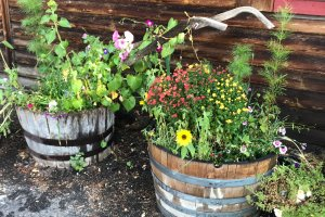 Flower pots in wood crates
