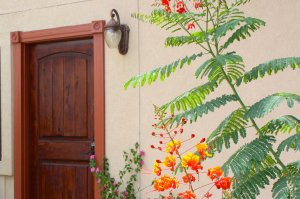 door and bright plants