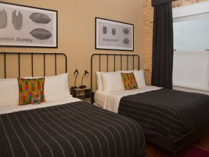 Two queen beds with feather throw pillows