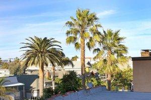 palm trees along skyline