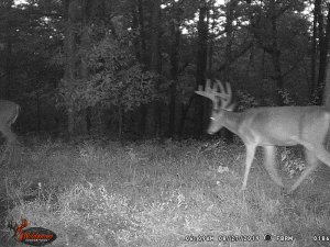 8-27-2019 night time Trail Cam Image of white tail Deer broad side