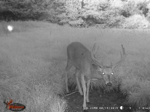 8-19-2019 Trail Cam Image of one white tail Deer