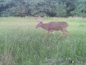 9-4-2019 Trail Cam Image of one Deer