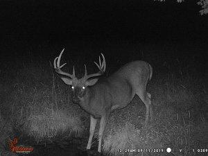 9-11-2019 Trail Cam Image of Deer