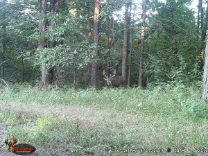 8-27-2019 Trail Cam Image of white tail Deer over seep facing