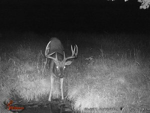9-2-2019 Trail Cam Image of Deer