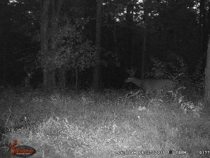 8-27-2019 Blurry Trail Cam Image of white tail Deer broad side