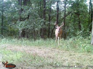 8-11-2019 Trail Cam Image of one Deer