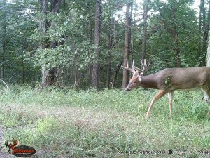 8-27-2019 Day time Trail Cam Image of white tail Deer broad side