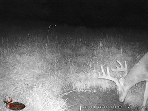 8-27-2019 Trail Cam Image of white tail Deer over seep